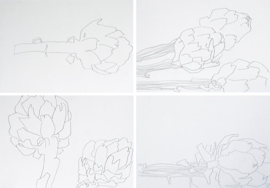 artischocke zeichnung